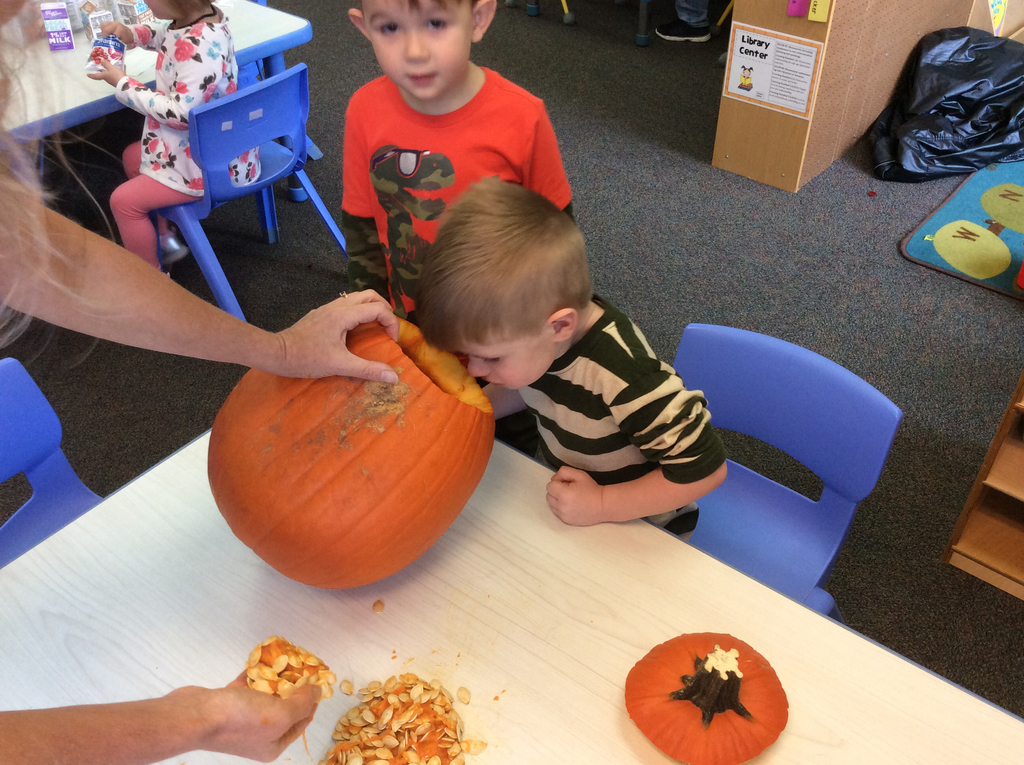 Smelling the inside of the pumpkin.