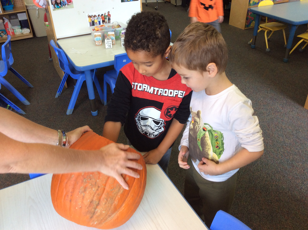 Looking at the inside of the pumpkin.