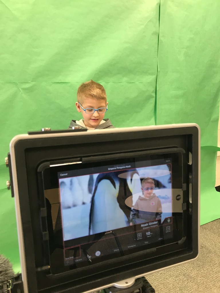 Green Screen Penguin Reports